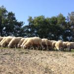 Animali e fattorie Vesime